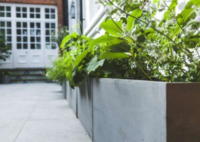 green plants in planters along wall in contemporary garden