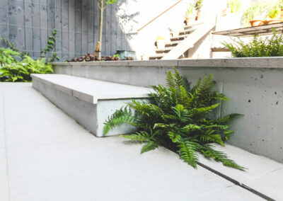 fern planted into grey patio tiles