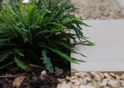 fern in flower bed in contemporary garden design