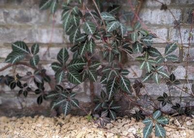 climbing plants growing on brick wall