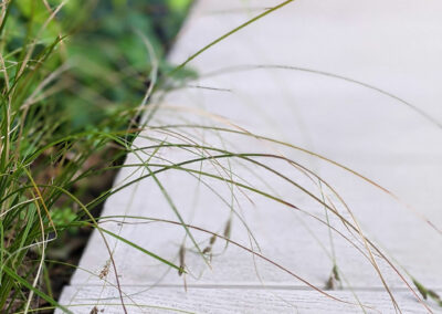 plants hanging over wooden decking in contemporary garden