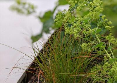 grasses and plants in a planter box in contemporary garden