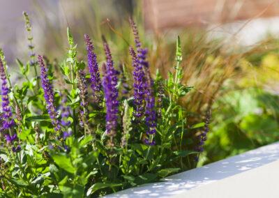 purple flowers in a garden planter