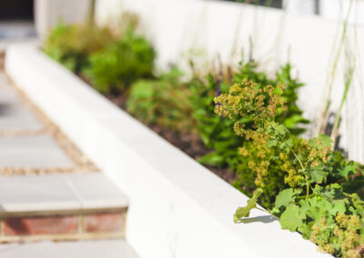 plants in a white raised planter