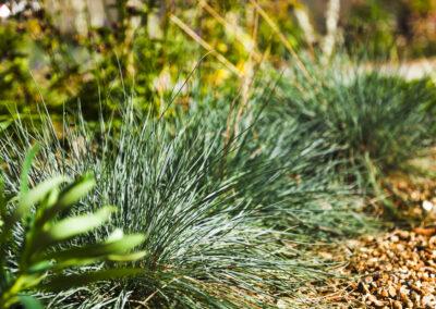 Grasses in low maintenance front garden