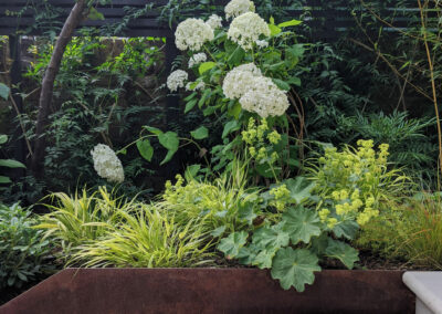 white hydrangeas in planter boxes along wide steps