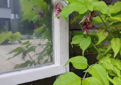 close up of plant growing beside a window
