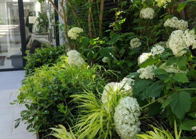 white hydrangeas in raised planter boxes