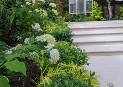 white hydrangeas and green foliage bordering grey steps in contemporary garden