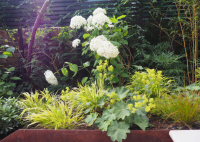 white hydrangea and small ferns in wooden planter box