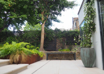 Plants and trees in a contemporary garden