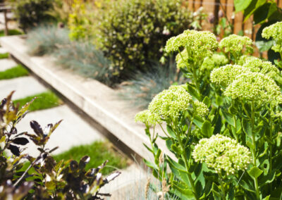 Plants in a family garden