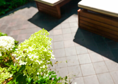 Outdoor wooden benches and plants in garden